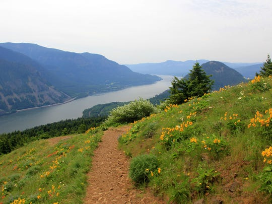 The lower meadows of Dog Mountain on the Washington side of the Columbia River Gorge near Stevenson, feature a nice collection of balsamroot and other wildflowers during May and early June. It is a bit easier to reach with just 1600 feet of elevation gain.