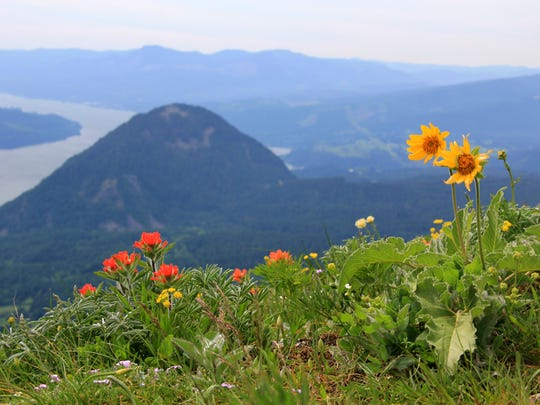 Dog Mountain is home to spectacular wildflower displays during spring.