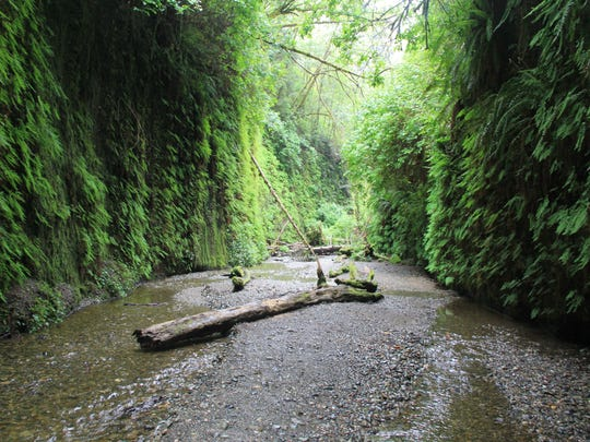 Fern_Canyon9