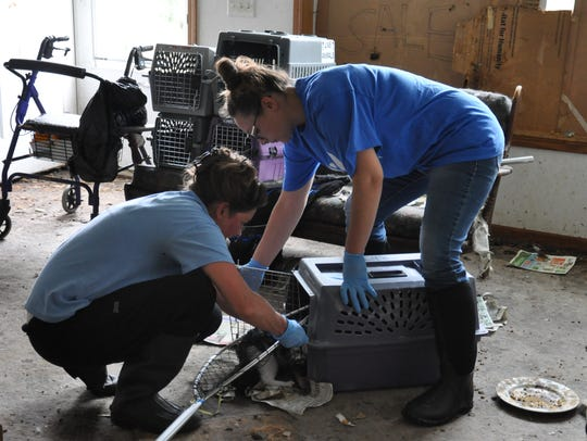 Wisconsin Humane Society staff rescued more than 60