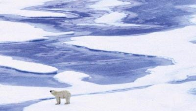 A polar bear pauses while exploring an area of sea ice in Alaska, in this file photo. Diminishing sea ice in the Arctic is one of the suggested impacts of man-made climate change.