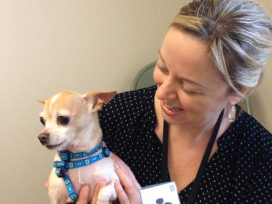 Kelly Rivers of Colchester holds her Chihuahua, Bruno,