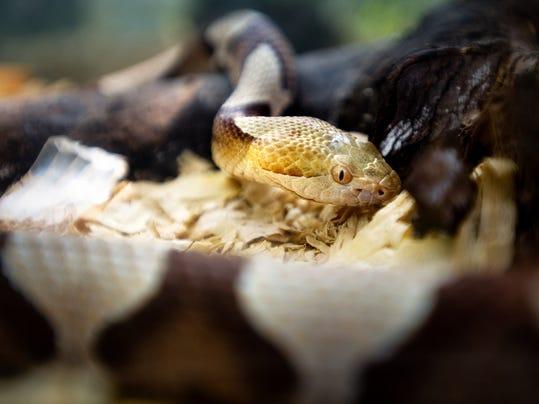 AP_Snakebite_Fears