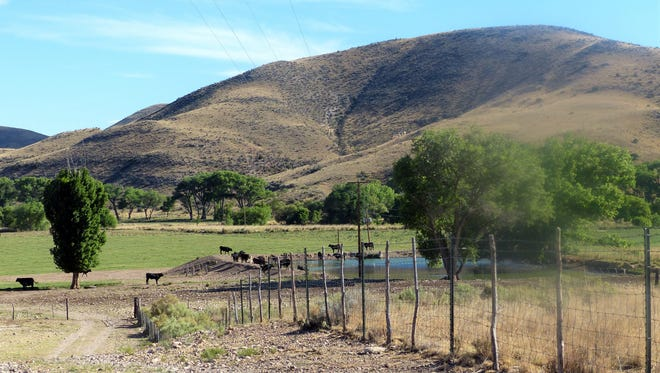 Cattle enjoy the shade and water at this ranch in the Hondo Valley of Lincoln County.