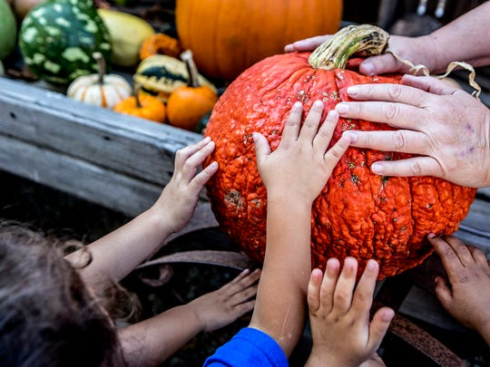 Children from the Remake bilingual preschool learn about different types of pumpkins and gourds at Pigeon Roost Farm in Hebron.