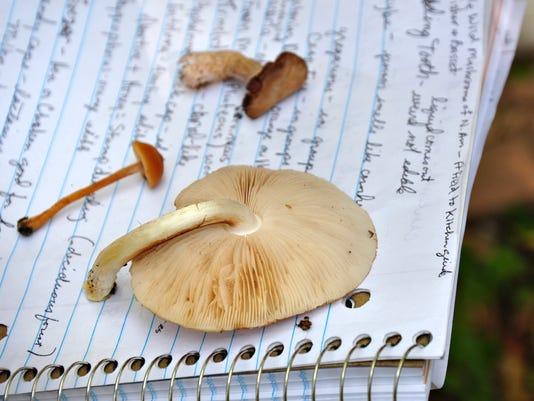 635486400454208980-STC-1012-WW-Mushrooms-07