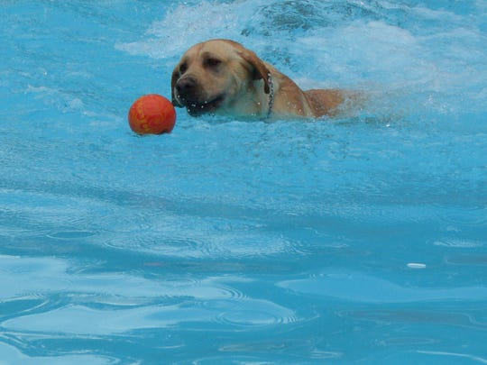 Cooper chasing his ball in the pool.