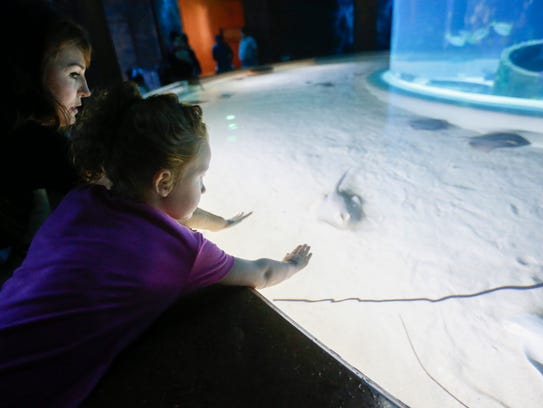 Alex Grady and her daughter Lucy, 5, pet the rays as