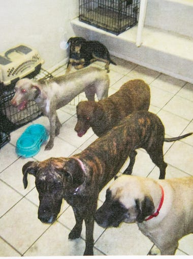 Dog deaths at Gilbert boarding site: