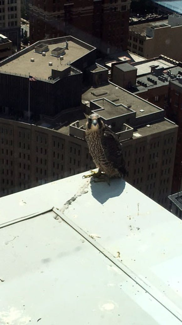 Una visits the 29th floor ledge of Market Tower on