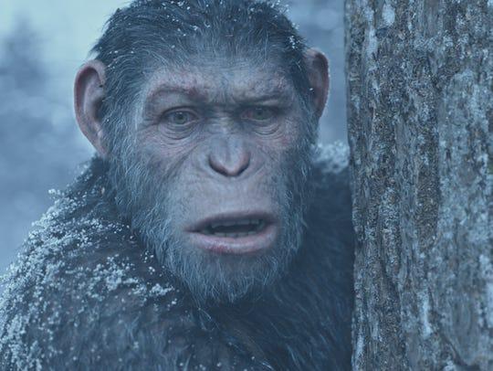 Caesar (Andy Serkis) struggles for survival in 'War