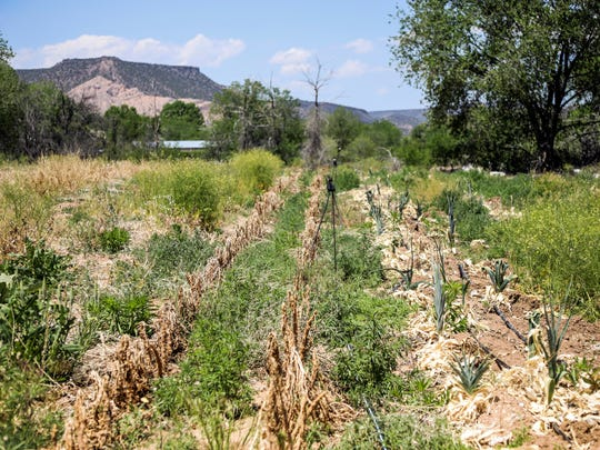 This Wednesday, May 23, 2018, photo, shows Matt Romero's empty fields in Dixon, N.M. In previous years, Romero planted asparagus, leeks, carrots and various other crops in this area. But this year, due to a lack of water, Romero has cut back and focused his attention to farming in Alcalde.