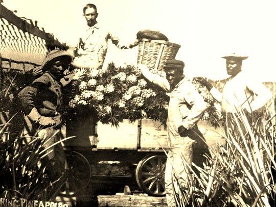 "The 1910s pineapple fields of John Isaac ""Ike"" Craig,"