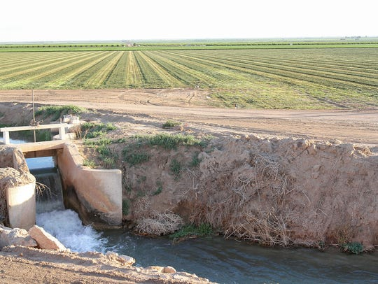 Water flows through a canal next to an alfalfa field