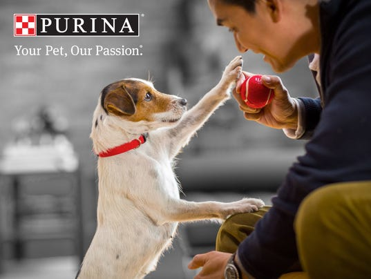 What Purina Dog Food Is Killing Dogs