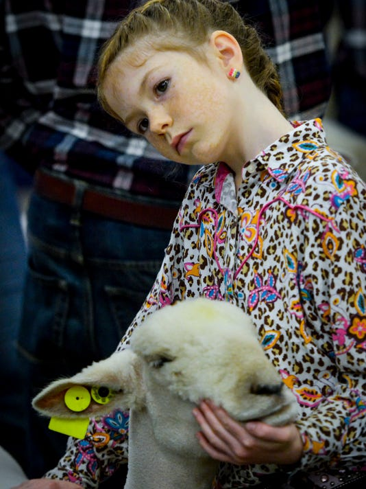 PHOTOS: Junior Market Lamb Show & Showmanship judging