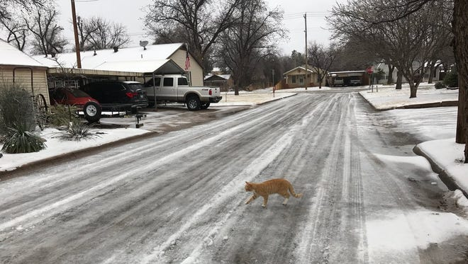 A cat crosses an iced-over Davis Drive on the morning of Thursday, Feb. 22, 2018.