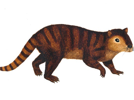 A sketch of Kimbetopsalis simmonsae by one of the authors