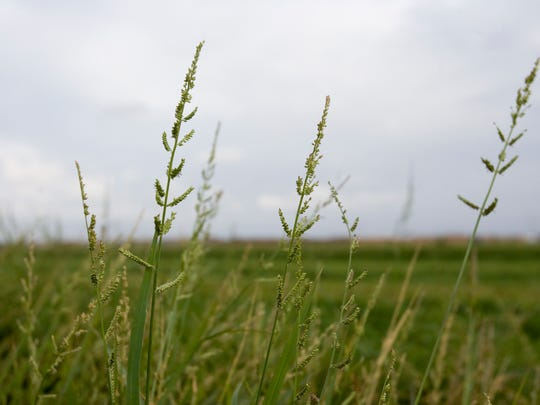 Arizona is exporting water in the form of alfalfa hay, without  realizing it.