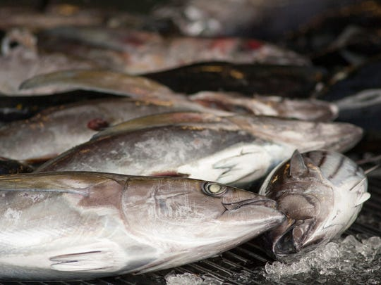As traditional commercial fishing is threatening fish