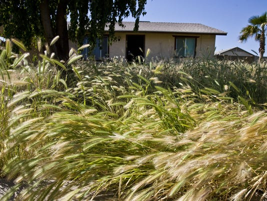 164124 cr-weeds0417