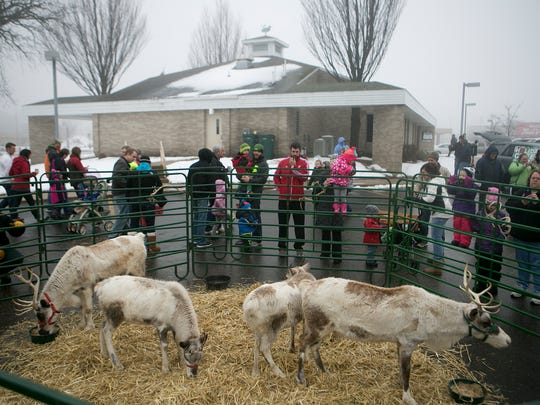 Many people gathered to meet the reindeer in the Marshfield Area Chamber of Commerce and Industry parking lot, Saturday, Dec. 13, 2014.