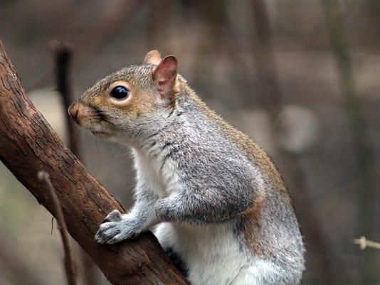 HES-SUB-123015-Wolf-Squirrel.jpg