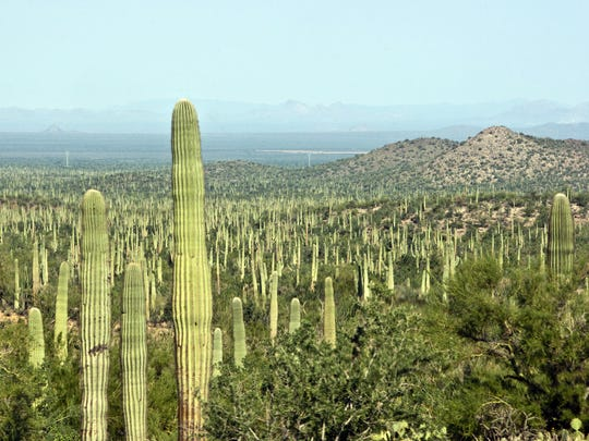 The Ironwood Forest National Monument features 129,000