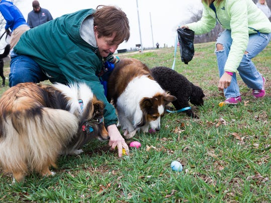 Dogs and their owners hunt for Easter eggs during the Doggie Easter Egg Hunt held at the West Manheim Recreation Park on Saturday, March 19, 2016. Over 50 dogs were in attendance at the event, which featured eggs filled with various dog treats.
