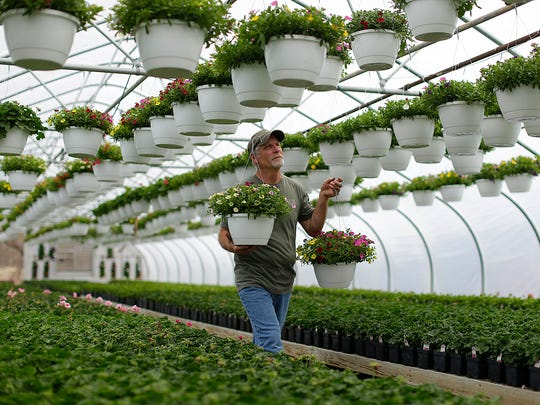 Bruce Parmentier has been putting in 12-hour days at Parmentier's Bellevue Greenhouse to get ready for Friday's opening. His family's Parmentier's Ninth St. Floral in Green Bay closed last year, but he's continuing on at the east-side location where he's worked for more than 30 years.