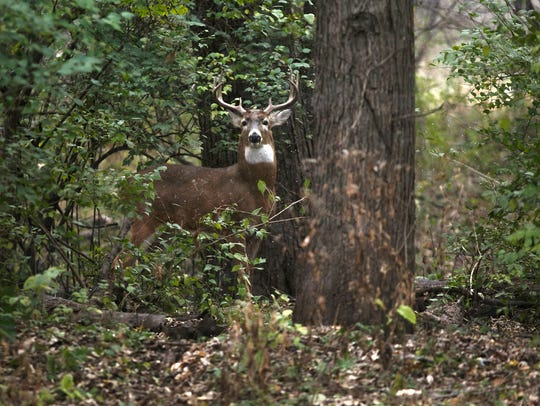 A deer walks on a bike trail as the first snow of the