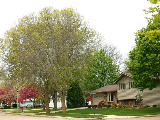 Two ash trees sit in the front yard at 121 20th Street