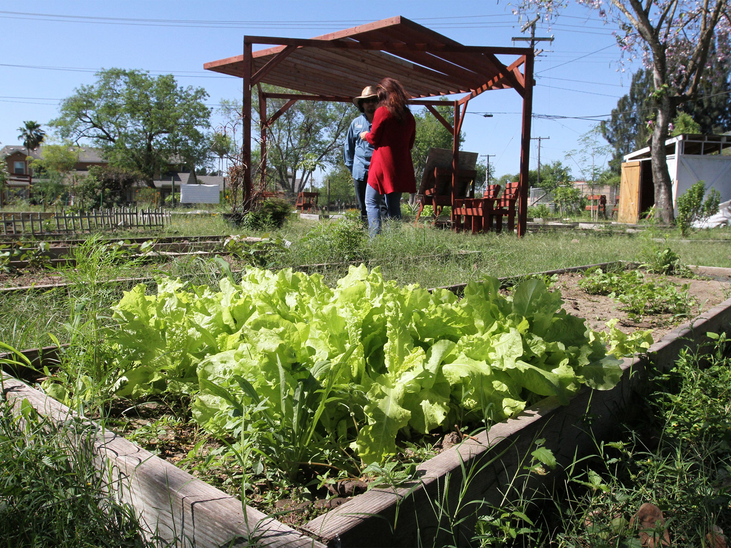 Members of the Brownsville Community Garden grow a variety of vegetables for sale at nearby farmers markets.