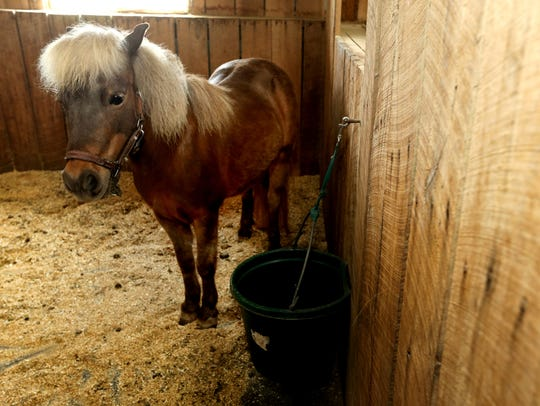 Dawn Field has 3 therapy ponies, including Mystery,