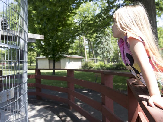 Alexis Kluck, 5, watches the ring-tailed lemurs during