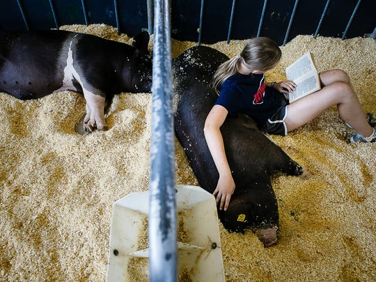 Reagan Gibson, 13 of Panora, reads a book on her pig, Holly, at the Iowa State Fair on Saturday, August 13, 2016 in Des Moines.
