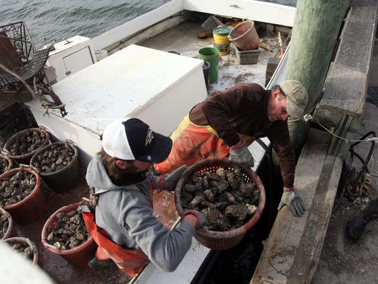 oyster season maryland