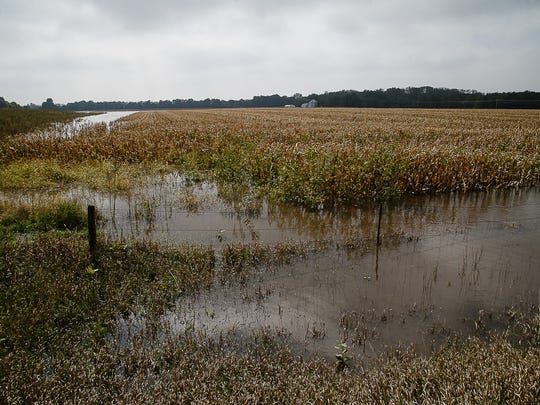 A cornfield sits flooded up to the top of the stalks in some places on Saturday, Sept. 24, 2016, in Cedar Falls.