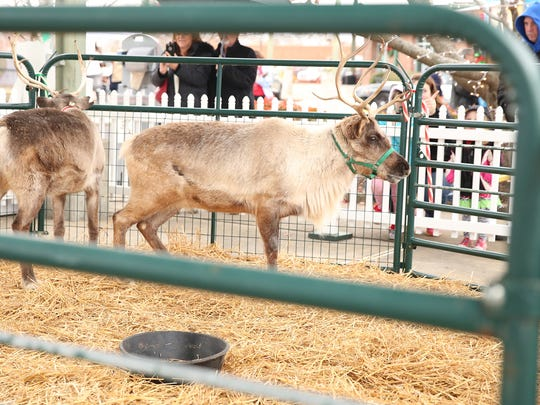 Santa's reindeer enjoyed a brief rest Saturday at Jackson's Christmas in the City.