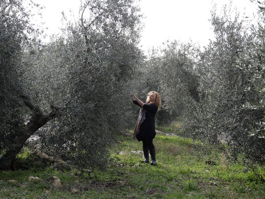 Lucia Iannotta, head of an olive farm, checks an olive tree in the family business' grove, in Capocroce, Italy, Thursday, Feb. 16, 2017. From specialty shops in Rome to supermarkets around the world, fans of Italian olive oil are in for a surprise this year as prices are due to jump by as much as 20 percent.