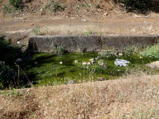 Algae grows in a drainage ditch off Court Street near downtown Redding on Wednesday as a Redding police officer, social service workers and volunteers survey homeless camps in the area.