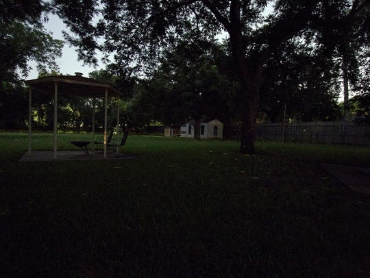 Fireflies swirl around this homeowners backyard Tuesday,
