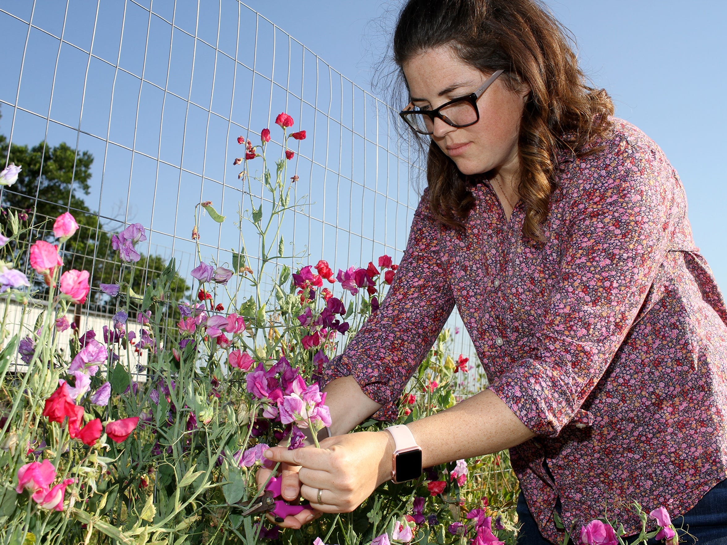 Blair Ramon said if she's doing her job, you won't see many blooms at Gilbert Creek Gardens in Burkburnett, as she's constantly harvesting flowers for delivery to such places as Frank & Joe's, Odd Duck Coffee and LITTLE h CREATIVE.
