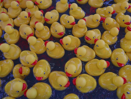 Prize ducks float in a pool Thursday at the Shasta