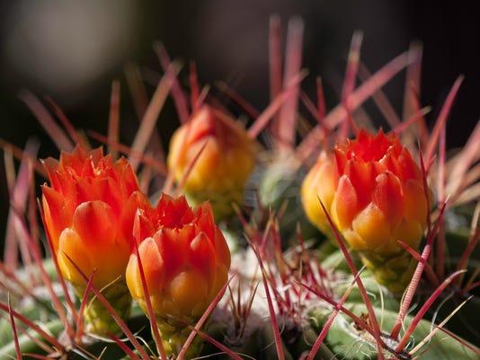 TDS-NBR-0630-Desert-Flowers-1.jpg