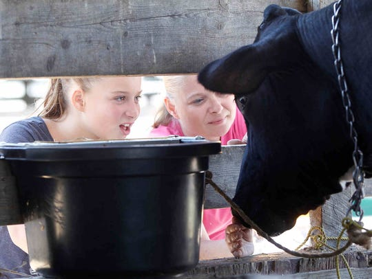 Give kids a chance to learn about livestock at one of the region's many county fairs, like last year's Broome County Fair in Whitney Point.