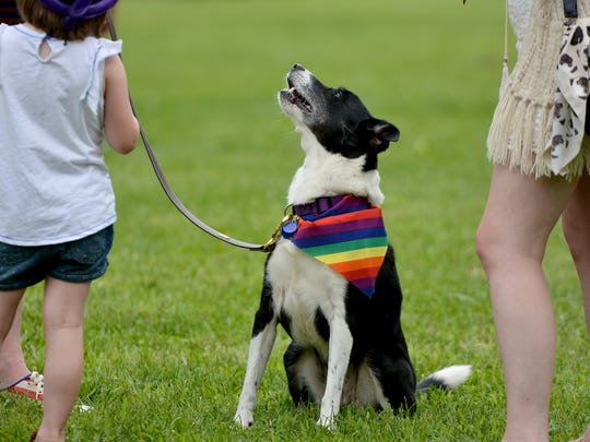 Amber the border collie sports a rainbow neckerchief during the 4th Annual Equality Fest at Penn Park in York, Sunday, Aug. 6, 2017.  John A. Pavoncello photo