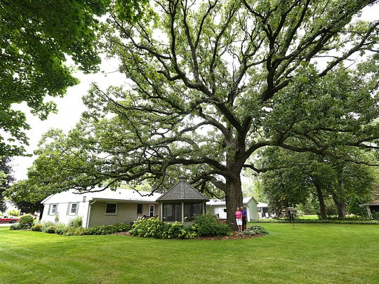 Sustain Fond du Lac seeks to plant 2,020 trees in 2020. Pictured is a bur oak tree found in the backyard of Sue and Bill Kuespert in 2017. Wisconsin Department of Natural Resources designated it a champion tree.