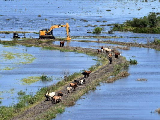 harvey-cattle.jpg