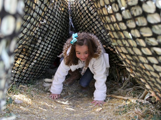 Cadence Padgett, 7, of Great Falls crawls adventurously through a tunnel of corn making her way out of the dark and back into daylight at the Applestem Corn Maze (formerly Sterling Cattle Company Maze).